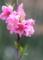 京都新聞写真コンテスト 鮮やかに咲く