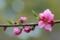 京都新聞写真コンテスト 春に咲く