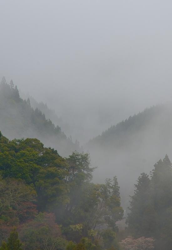 京都新聞写真コンテスト 春雨に煙る