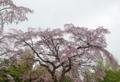 京都新ト 春景色