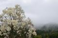 京都新聞写真コンテスト 木蓮の咲く頃