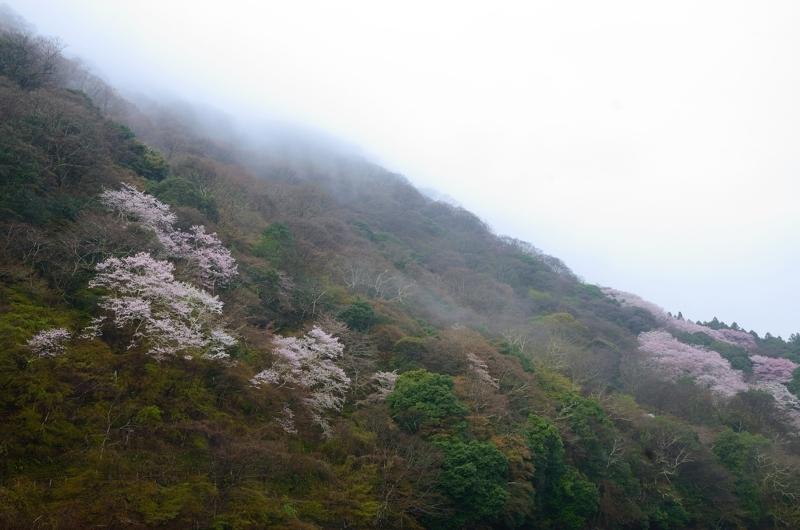 京都新聞写真コンテスト 春景色