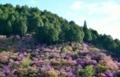 京都新聞写真コンテスト 春の山肌