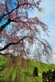 京都新聞写真コンテスト 里山に咲く