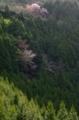 京都新聞写真コンテスト 山里の彩り