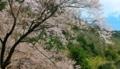 京都新聞写真コンテスト 里山を彩る