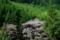 京都新聞写真コンテスト 山林の春