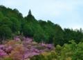 京都新聞写真コンテスト 春の訪れ