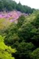 京都新聞写真コンテスト 春色の山林
