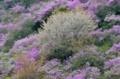 京都新聞写真コンテスト 色鮮やかな春色