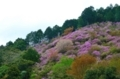 京都新聞写真コンテスト 春山