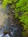 京都新聞写真コンテスト 緑色の渓