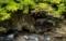 京都新聞写真コンテスト 新緑の渓流