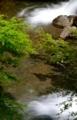 京都新聞写真コンテスト 新緑の青もみじ