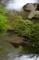 京都新聞写真コンテスト 新緑の流れ
