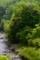 京都新聞写真コンテスト 新緑の渓