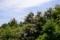 京都新聞写真コンテスト 初夏の風景