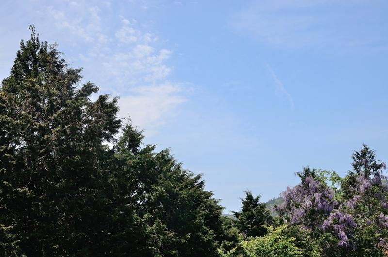 京都新聞写真コンテスト 初夏の青空