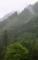 京都新聞写真コンテスト 新緑の雨