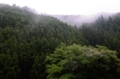 京都新聞写真コンテスト 初夏の北山