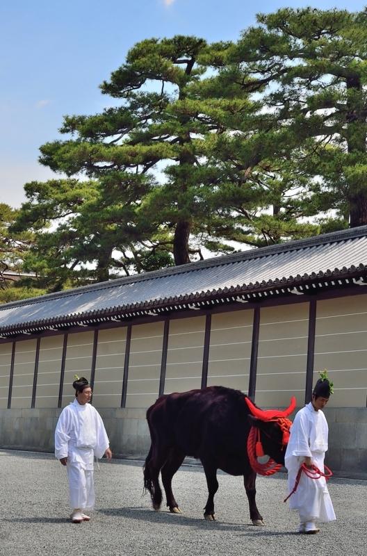 京都市新聞写真コンテスト 出番前