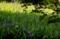 京都新聞写真コンテスト 新緑に映える