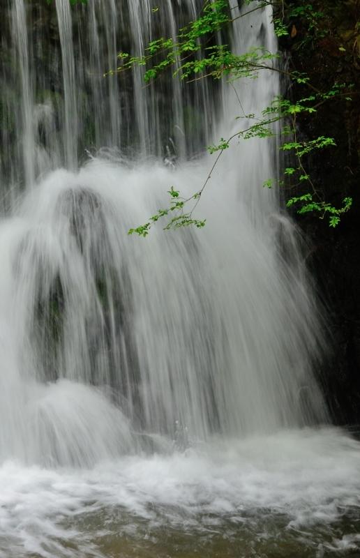 京都新聞写真コンテスト 新緑の滝