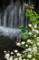 京都新聞写真コンテスト 初夏の滝