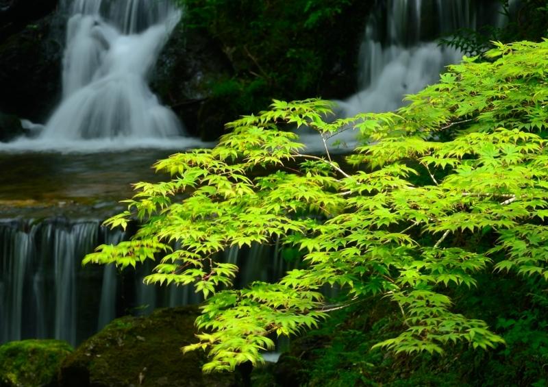 京都新聞写真コンテスト 青葉の季節
