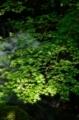 京都新聞写真コンテスト みずみずしい青葉