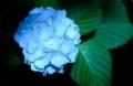京都新聞写真コンテスト 初夏の夜明け