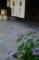 京都新聞写真コンテスト 初夏の街角