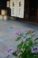 京都新聞写真コンテスト 初夏に」咲く