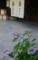 京都新聞写真コンテスト 古都の街角