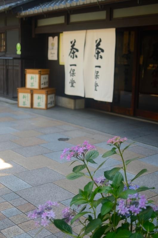 京都新聞写真コンテスト 古都を彩る