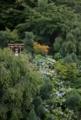 京都新聞写真コンテスト 初夏の彩り