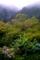 京都新聞写真コンテスト 雨模様