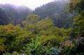 京都新聞写真コンテスト 雨上がりの初夏