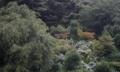 京都新聞写真コンテスト 紫陽花の咲く頃