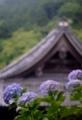 京都新聞写真コンテスト 雨の山寺