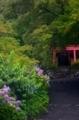 京都新聞写真コンテスト 山寺に咲く