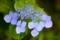 京都新聞写真コンテスト 色鮮やかに咲く