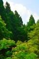 京都新聞写真コンテスト 夏の花