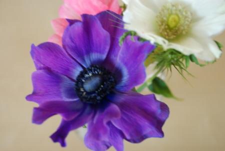 f:id:koume-life:20060120033251j:image