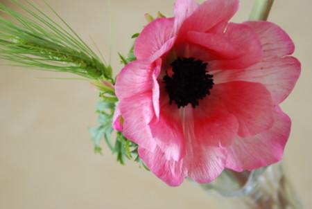 f:id:koume-life:20060120050309j:image