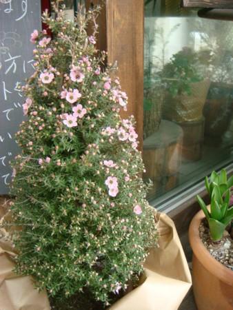 f:id:koume-life:20110208121558j:image