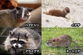 f:id:koushuya:20180516010019j:plain