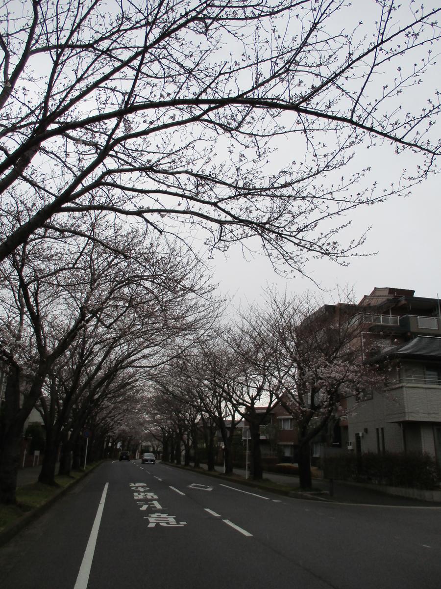 f:id:koushuya:20190330063013j:plain