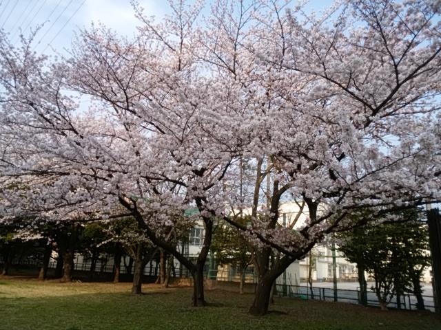 f:id:koushuya:20190408000328j:plain