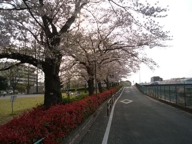 f:id:koushuya:20190408000426j:plain